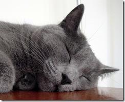 sleepygraycat