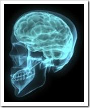 skull_brain_xray